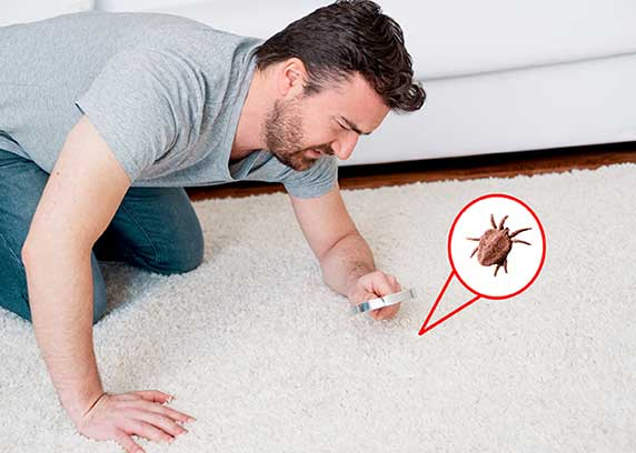 Man looks for dust mites on the carpet with a magnifying glass.