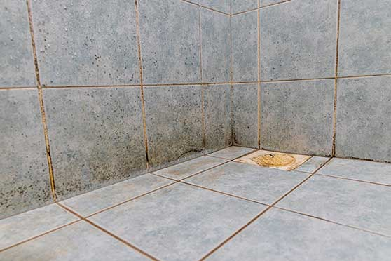 mold and mildew growth on shower tile and grout